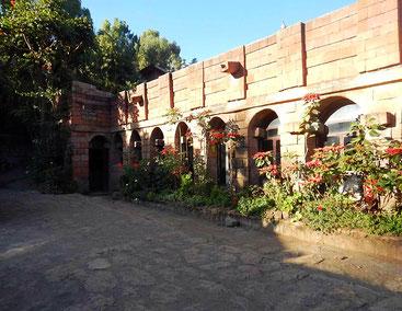 ©Textes et Photos Pascal Mawuli Macé_travel_Voyage_Ethiopia_Commerce_solidaire_Mawuli-Ethiopie_hotel_ethiopie_Lalibela_fleur_ethiopie