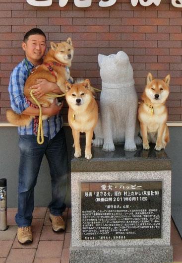 鍼灸師 3頭の柴犬
