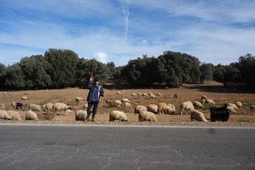 Berger avec ses moutons