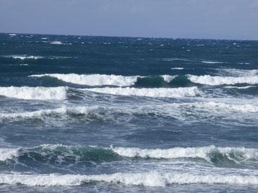 風も結構強かったですが、少しおさまった時が狙い目でした。