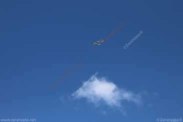 Fliegende Möwe am blauen Himmel