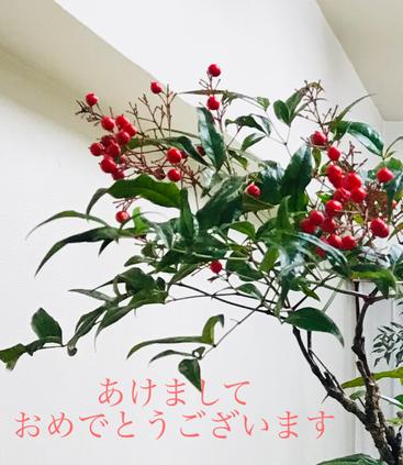 南天 正月花