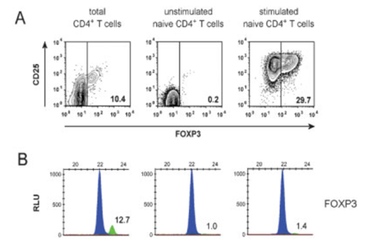 FOXP3 TSDR is de-methylated in Treg and fully methylated in stimulated CD4+ T cells, that transienly express the FOXP3 protein (Baron et al., 2007)