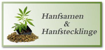 Hanfsamen & Hanf Stecklinge