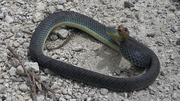 Schlange-Stehen auf Korfu