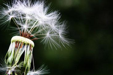 allergie hypnose grenoble pollen