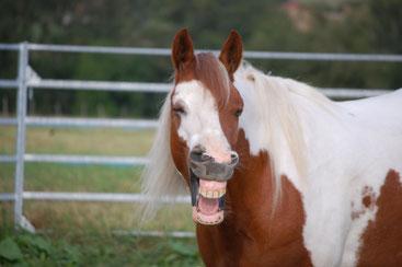 Roméo qui rigole