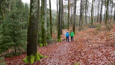 Wald bei Esthal