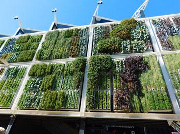 Vertikaler Garten, vertical gardening, urban gardening, urban green, green building, nachhaltig, Stadt