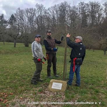 Götz Schrembs, Oliver Hartstang und Albert Schlipf beim Schnitt eines Jahrgangsbaumes
