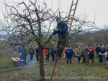 Bäume schneiden hält jung: Helmut Fähnle bei der Pflege eines Apfelhochstamms.