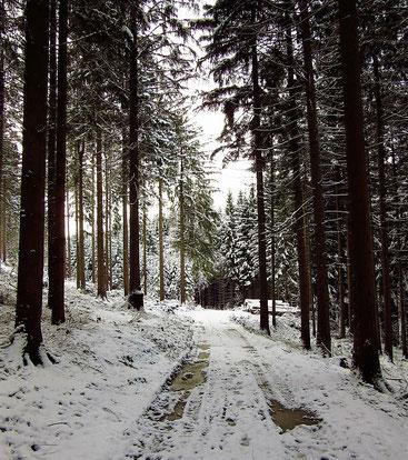 Den Waldweg hinauf in den verschneiten Wald