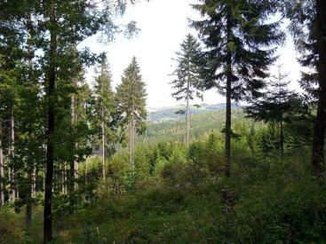 Blick auf die Dittersdorfer Höhe