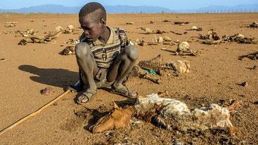 Strage di bestiame, causa siccità, nella contea del Turkana, in Kenya