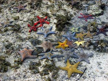 Stelle marine Isola di Zanzibar-Tanzania