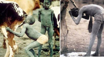 Adolescenti della tribù Bubal leccano i genitali della mucca e si lavano la testa con l'urina