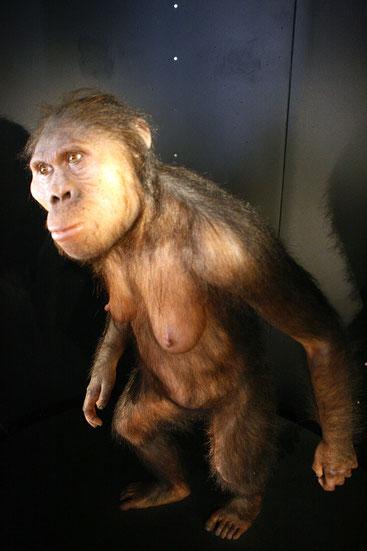 Australopithecus africanus. Ricostruzione