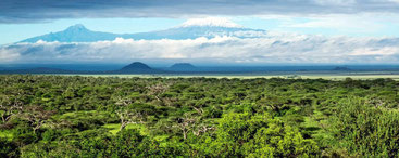 Landscape Kilimanjaro