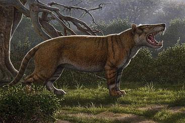 Simbakubwa kutokaafrika, il grande carnivoro di cui sono stati rivenuti, in Kenya, gran parte della mandibola, frammenti del cranio e parti dello scheletro, faceva parte del gruppo estinto degli ienodonti