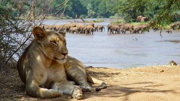 Ewaso Ng'iro River