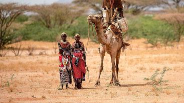 Camelidi del Kenya