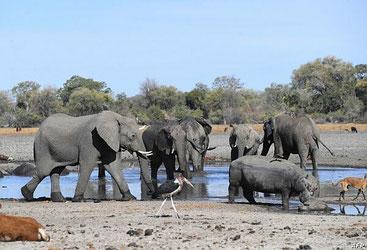 Elefanti in Botswana