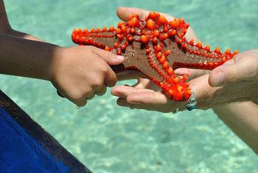 Turisti ignoranti, e pure imbecilli, raccolgono una stella marina