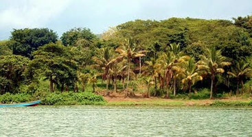 Isola di Koome - Lago Vittoria, Uganda