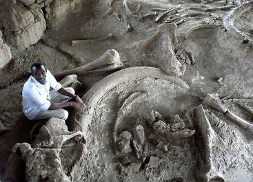 Koobi Fora Prehistoric Site, Lake Turkana