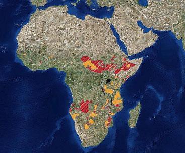 Mappa del 2016 del Wildlife Conservation Society(WCS) delle aree dell'Africa dove vive il leone (arancione) e dove è scomparso (rosso).