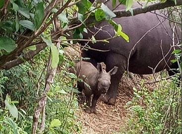 Il cucciolo di rinoceronte bianco meridionale nato nel Parco di Meru
