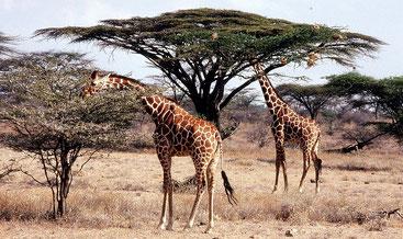 Parco Nazionale dello Tsavo