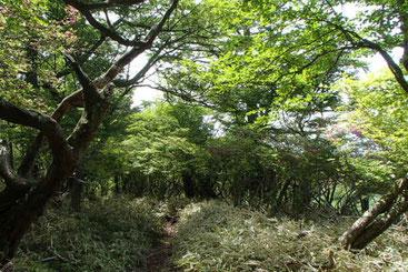 美し森ガイド