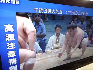大相撲が始まりましたね~。