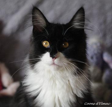 Cliquez sur la photo du chat pour accéder à sa description