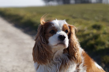 Hundepension in der Nähe von Melle und Osnabrück