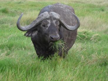 5 Tage Safari in Kenia