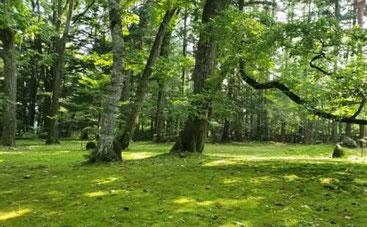 軽井沢の別荘地にあるひときわ目を引く苔の庭