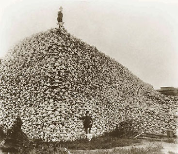 パイソンの頭骨の山