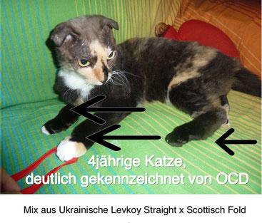 Ausgesetzte Katze, 06/2017, Foto: Birgitta Kuhlmey