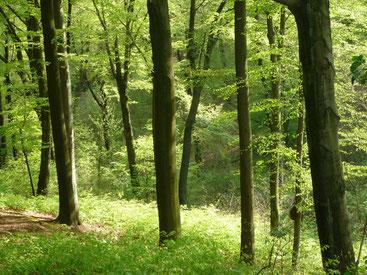 Wald, Gesundheit, Wald-Wellness, Stress, Wandern, Urlaub