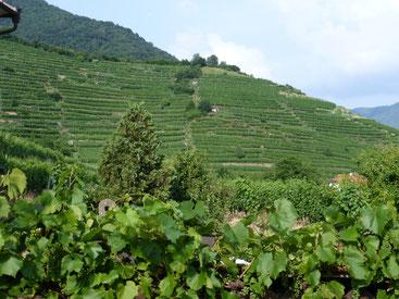 Wachauer Weinberge sind steil