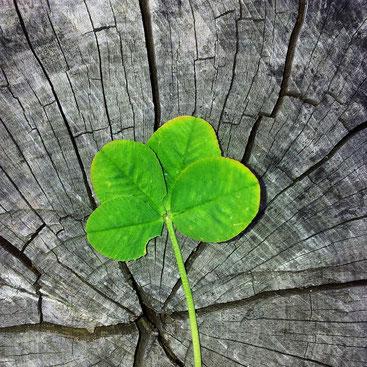 Glücksbringende Segnungen - Der Mai im SOULGARDEN Feng Shui Blog