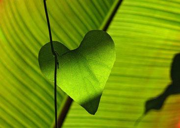 Das Element Holz und das Herzchakra - der März im SOULGARDEN Blog