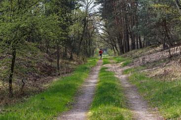 RC Vorwärts LäuferInnen erfolgreich unterwegs. Foto: Pixabay/ summa
