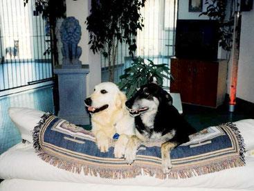 Damalige Haushunde KLIA und DINO / Entspannung muss auch mal sein