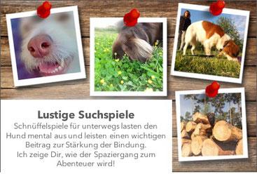 Hundeschule, Butzbach, Hund, Training, lockere Leine, Schnüffelspiele, Suchspiele, Fun-Dog, Hundetraining