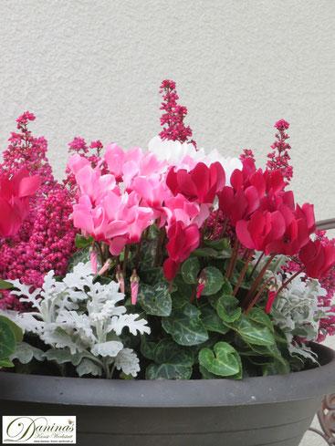 Grabschale bepflanzt mit Erika, Cyclamen und Silberblatt