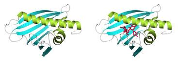 Bild: Forschungszentrum für Bio-Makromoleküle der Universität Bayreuth