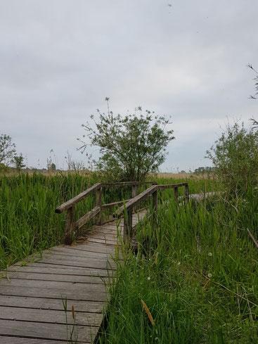 Selbstführung: Neue Brücken auf dem Weg finden